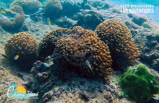 SCUBA DIVING HAWKSBAY FRENCH BEACH