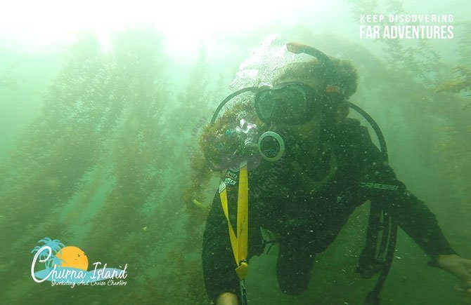 Scuba Diving in Majestic Kelp Forest